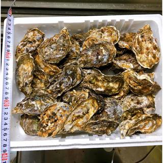訳あり‼︎広島産☆殻付き牡蠣  40個‼︎ 加熱用 産地直送 送料込み