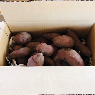サツマイモ 10㌔ 無農薬(野菜)