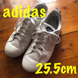 adidas - アディダス・スニーカー・25.5cm