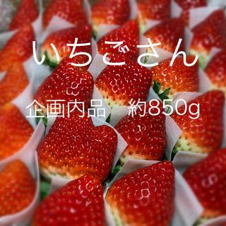 ○いちごさん○  苺 イチゴ(フルーツ)
