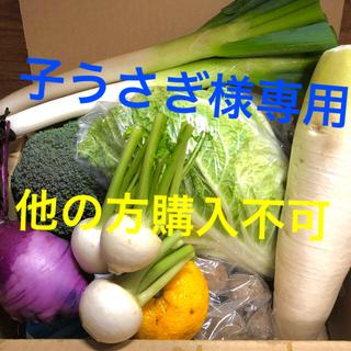 鹿児島で育った新鮮野菜詰め合わせ 80サイズ(野菜)