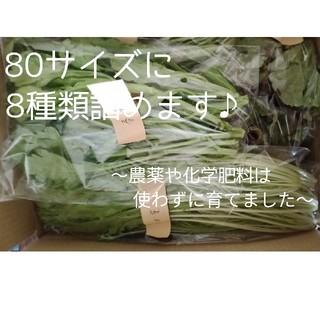 新米農家のお野菜セット(80サイズ)