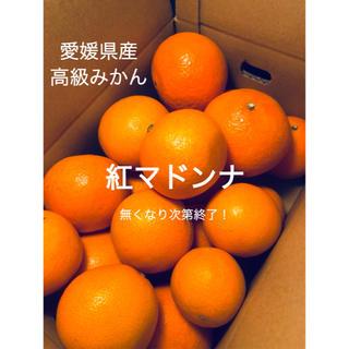 高級みかん【紅まどんな】ご家庭用 S〜3L玉 2kg