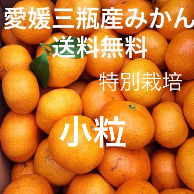 愛媛三瓶産みかん 小粒 3キロ 食品/飲料/酒の食品(フルーツ)の商品写真