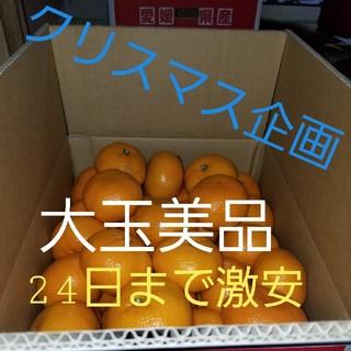 愛媛産みかん   南柑20号