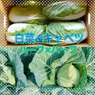 キャベツ 白菜 段ボール満タン 野菜