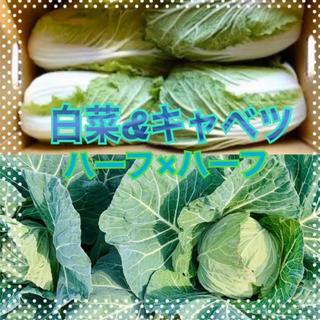 白菜 キャベツ 段ボール満タン 野菜
