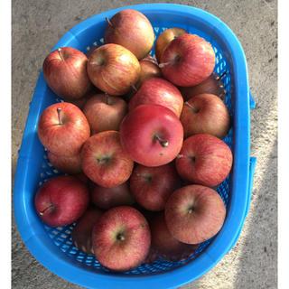 青森県産りんご 葉とらずふじ 5キロ