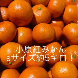 小原紅みかん みかん sサイズ 約5キロ 香川県産