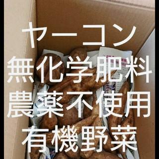 無農薬 ヤーコン詰め合わせ80サイズの箱にいっぱいに詰め合わせます。(野菜)