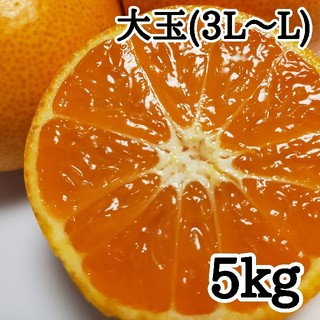 有田みかん【中生みかん(大玉)】(フルーツ)