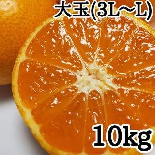 有田みかん【中生みかん(大玉)】  10kg(フルーツ)
