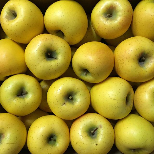 【送料込】葉とらずりんご シナノゴールド 30〜36個 約10kg  食品/飲料/酒の食品(フルーツ)の商品写真