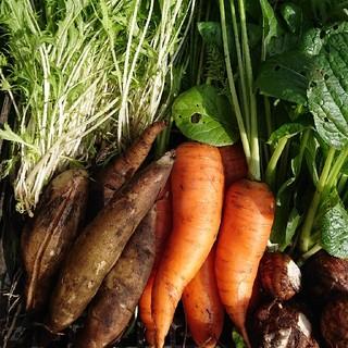 無農薬野菜セット100cmbox 朝どり野菜(野菜)