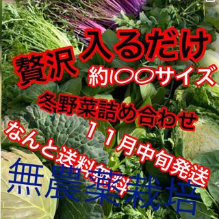 冬野菜詰め合わせ残りわずかるんちゃん専用ですカブ抜き約140サイズ予定(野菜)