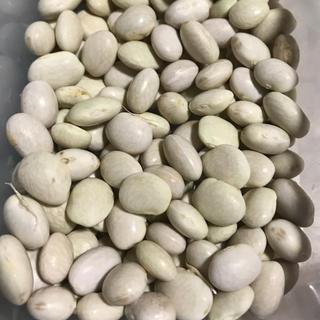 手はかからないけど手かけ豆? 手かけ豆の種 30粒(野菜)