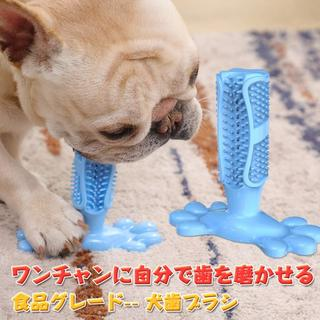 ペット専用 歯磨き 犬 猫