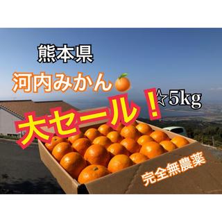 熊本県 河内みかん 5kg  ☆完全無農薬ミカン☆農家直送(フルーツ)