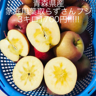 青森県産 家庭用葉取らずさんフジ3キロ