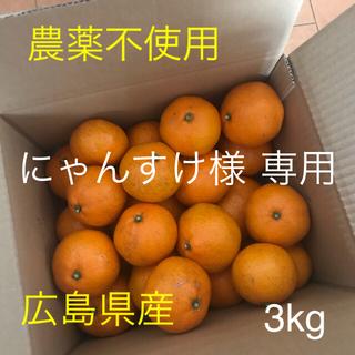 瀬戸内 広島 みかん 農薬不使用 3kg