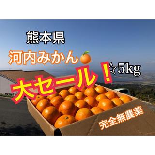数量限定 熊本県 河内みかん 5kg  ☆完熟無農薬ミカン☆農家直送(フルーツ)