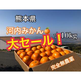 数量限定 熊本県 河内みかん 10kg  ☆完熟無農薬ミカン☆農家直送(フルーツ)