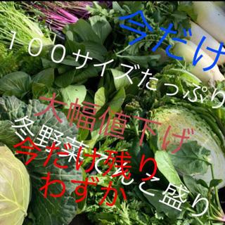 残りわずか❗️山東菜追加で野菜詰め合わせ送料無料激安価格値下げ入るだけ(野菜)
