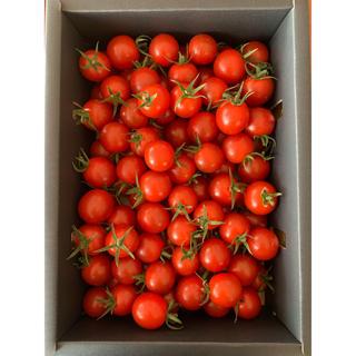 熊本県 完熟濃厚ミニトマト  500g ☆キャロルセブン☆ 農家直送(野菜)