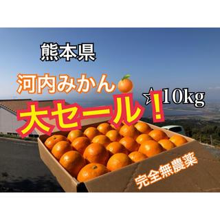 数量限定 熊本県 河内みかん 10kg  ☆完全無農薬ミカン☆農家直送(フルーツ)