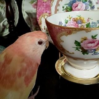 ロイヤルアルバート(ROYAL ALBERT)のカップとソーサー 1客(グラス/カップ)