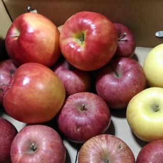 りんご詰め合わせ 規格外 箱込み5.5kg(フルーツ)