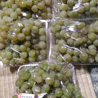 ぶどう ナイヤガラ 3.8kg(フルーツ)