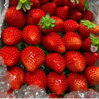 規格外いちごさん約1kg●いちご 苺 イチゴ(フルーツ)