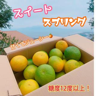 熊本県 濃厚ミカン☆エレンスイートスプリング☆ 3kg 農家直送(フルーツ)