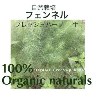 食用 フェンネル 生葉 カット茎 自然農法 完全無農薬無化学肥料有機栽培(野菜)