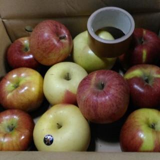りんご詰め合わせ 箱込み5kg(フルーツ)
