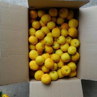 ②自家栽培した柚子約4.6キログラム(フルーツ)