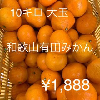 和歌山有田みかん 10キロ 大玉2L〜3L  訳あり(フルーツ)