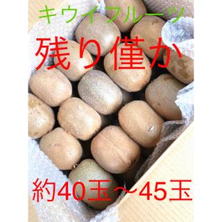《残り僅か》千葉県船橋産 グリーンキウイフルーツ 《送料無料》(フルーツ)
