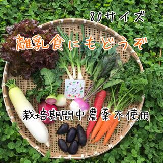 【離乳食にもどうぞ】渥美半島から直送!旬彩野菜バスケット(野菜)