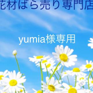 yumia様専用(ドライフラワー)