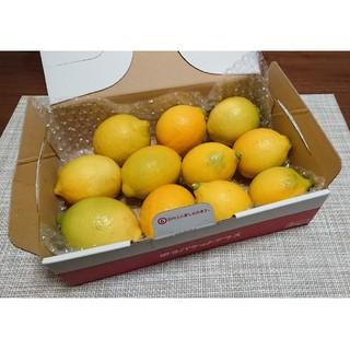 無農薬 国産 レモン ノーワックス ホットレモン はちみつレモン など  E(フルーツ)