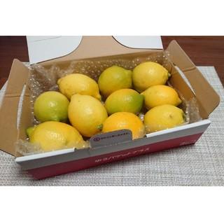 無農薬 国産 レモン ノーワックス ホットレモン はちみつレモン など  D(フルーツ)