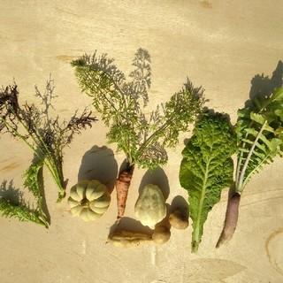 セミオーダー野菜セットS(野菜)