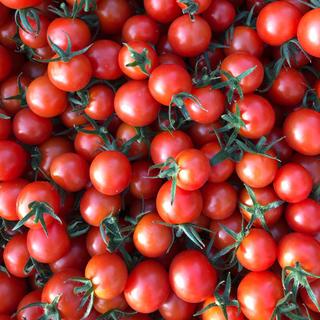 キャロルパッション ミニトマトSサイズ2キロ(野菜)