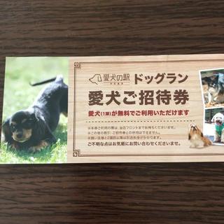 DOG DEPT - 愛犬の駅 ドッグラン 招待券
