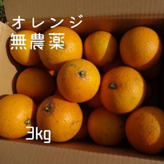 自家製 オレンジ 無農薬 加工用 約3kg(フルーツ)
