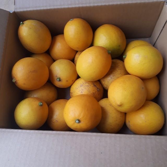 achu様専用 みかん10kg マイヤーレモン 2kg 送料無料 訳あり 食品/飲料/酒の食品(フルーツ)の商品写真