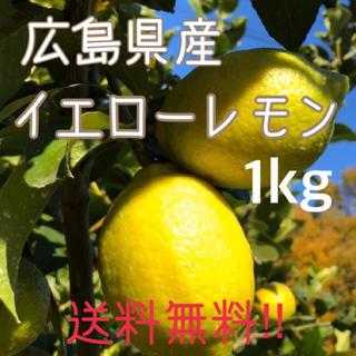 レモン 1キロ 広島県 大崎上島産 瀬戸内 もぎたて ノーワックス(フルーツ)