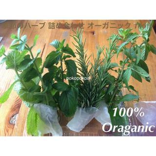 季節のハーブ 5〜7種 セット 完全無農薬無化学肥料有機栽培 オーガニック(野菜)